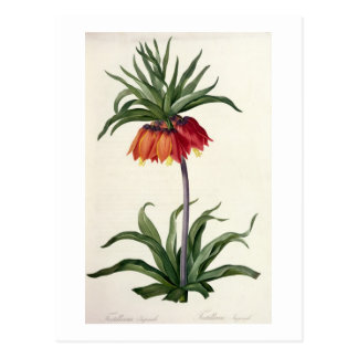"""Cartão Postal Fritillaria Imperialis de, """"Les Lilacees"""", 1802-"""