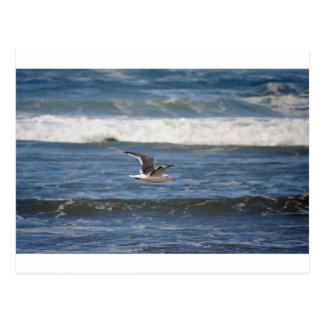 Cartão Postal Gaivota & surf de Oregon