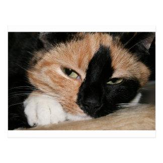 Cartão Postal Gato preguiçoso