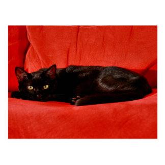 Cartão Postal Gato preto Edgar