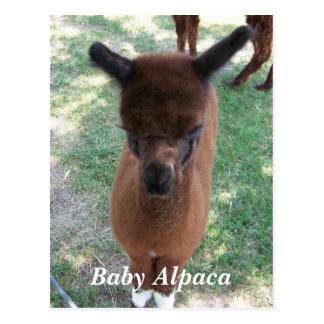 Cartão Postal Gena da alpaca do bebê
