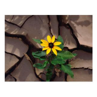 Cartão Postal Girassol que cresce de lama rachada