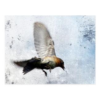 Cartão Postal Grunge do Bluebird