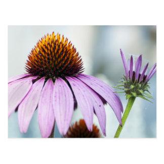 Cartão Postal Harmonia floral