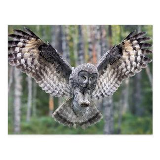 Cartão Postal Hunting Great grey owl