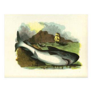 Cartão Postal Ilustração 1859 de FolkArt do tubarão do vintage