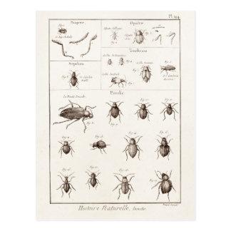Cartão Postal Ilustração dos besouros do inseto dos insetos dos
