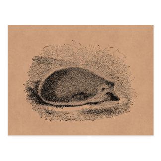 Cartão Postal Ilustração dos ouriços dos 1800s do ouriço do