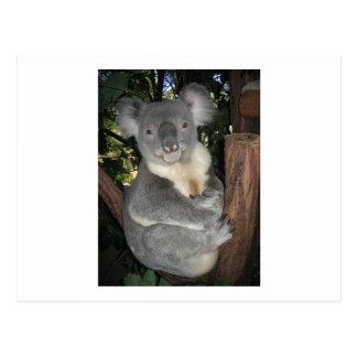 Cartão Postal Imagem de um Koala de ALerta