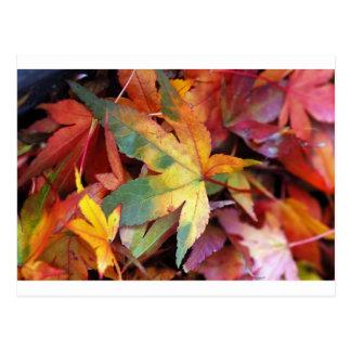 Cartão Postal Impressão bonito das folhas de outono