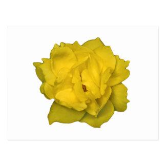 Cartão Postal Impressão da foto do rosa amarelo