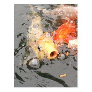 Cartão Postal Impressões dos peixes de Koi