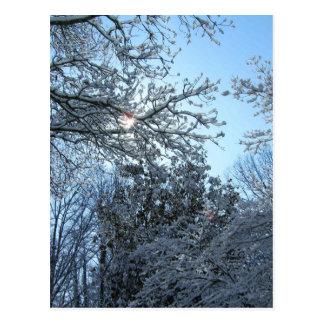 Cartão Postal Inverno nevado Sunlit do céu azul de Starburst das