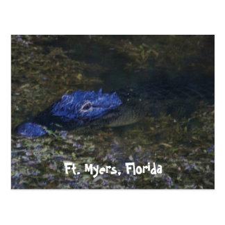 Cartão Postal Jacaré de Fort Myers