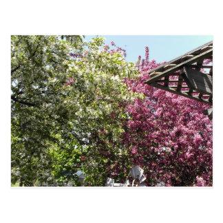 Cartão Postal Jardim preguiçoso