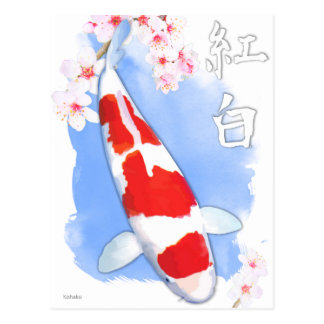Cartão Postal Kohaku Koi