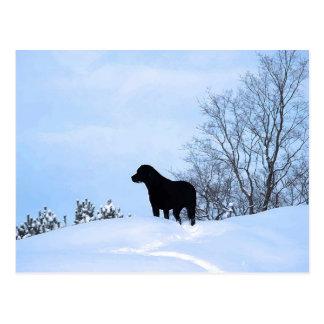 Cartão Postal Labrador preto - trajeto da vida