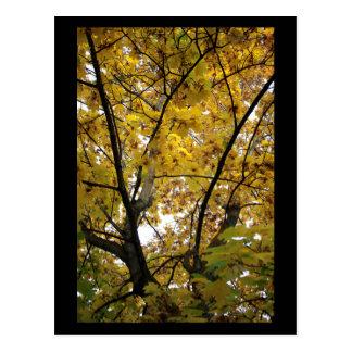Cartão Postal Lado de baixo das folhas do amarelo no mini