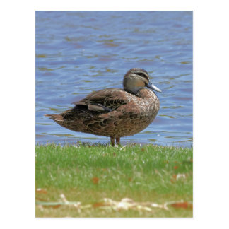 Cartão Postal Lagoa do pato