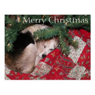 Cartão Postal Lebreiro sonolento do Natal