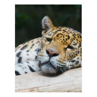 Cartão Postal Leopardo preguiçoso