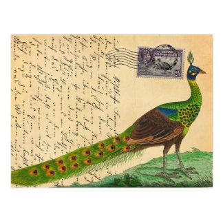 Cartão Postal Letra do pavão do vintage com selo & carimbo