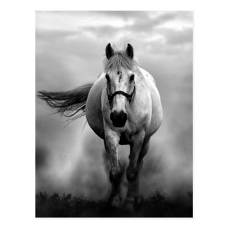 Cartão Postal Liberdade Running branca preta do cavalo