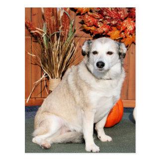 Cartão Postal Lírio - raça ronca Photo-8 da mistura de Terrier