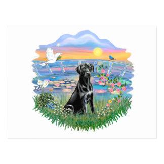 Cartão Postal Lírios do nascer do sol - Labrador preto