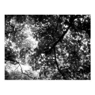 Cartão Postal Luz através das árvores