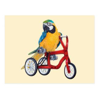 Cartão Postal Macaw do papagaio na bicicleta do triciclo
