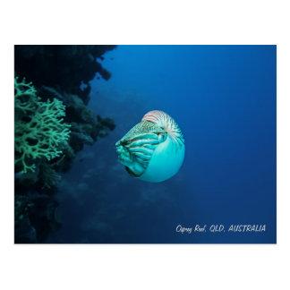 Cartão Postal Mar coral do grande recife de coral do nautilus