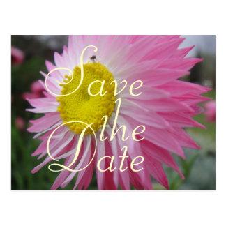 Cartão Postal Margarida de papel cor-de-rosa