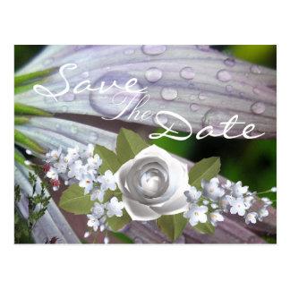 Cartão Postal Margarida do Lilac do pingo de chuva