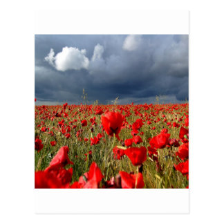 Cartão Postal Memórias da papoila de campo da natureza