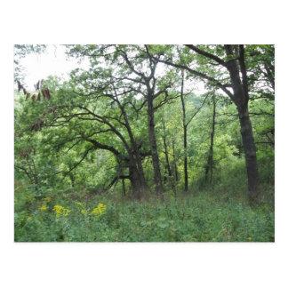 Cartão Postal Minas de árvores da espanha