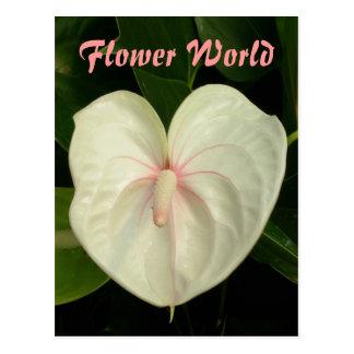 Cartão Postal Mundo da flor