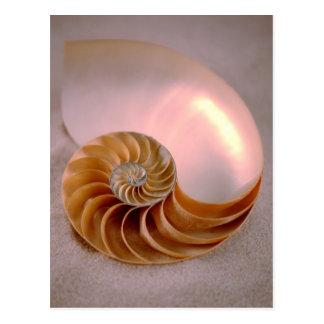 Cartão Postal Nautilus à temperatura ambiente