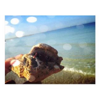 Cartão Postal O caranguejo de eremita & a praia