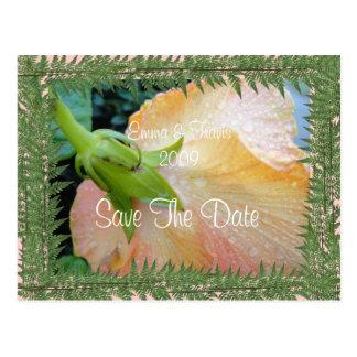 Cartão Postal O toque o mais macio