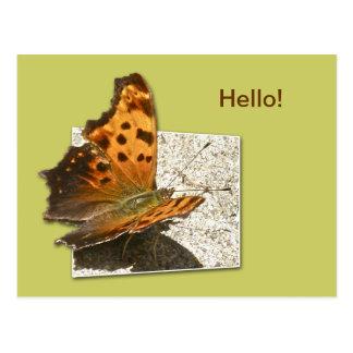 Cartão Postal Olá! borboleta de vírgula da asa do ângulo