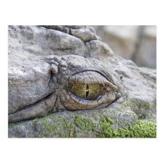 Cartão Postal Olho do crocodilo