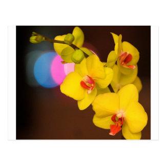Cartão Postal Orquídea da noite