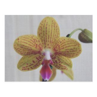 Cartão Postal Orquídeas cor-de-rosa e amarelas