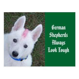 Cartão Postal Os german shepherd olham sempre resistentes