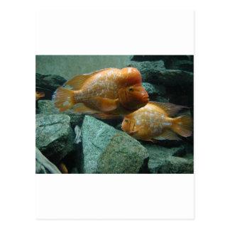 Cartão Postal Os peixes duvidosos de Momma da cara somente