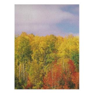 Cartão Postal Outono CANADENSE bonito: PRESENTES LOWPRICE