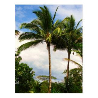 Cartão Postal Palmeira havaiana