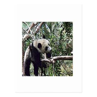 Cartão Postal panda preguiçosa
