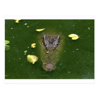 Cartão Postal Pântano verde do crocodilo